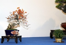 Noelanders Trophy 2012 / by Bonsai Empire