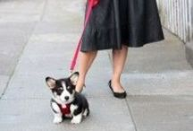Fashionista Fido / Everything stylish you would love for Fido.  Lucky dog!