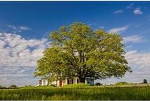 Around the Farm / There is never a dull moment at Moss Mountain Farm / by P. Allen Smith