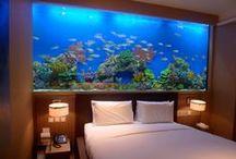 Freshwater Aquarium / by Mel Shamblen