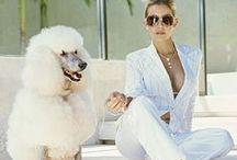 "Prestigious Puppy ""The Prestigious Life"" / Lifestyles of the Rich and Furry / by Prestigious Puppy"
