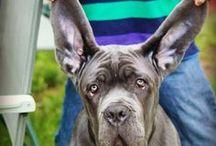 "Prestigious Puppy ""Daily Dogs"" / The stars of our #DailyDog posts on www.prestigiouspuppy.com  / by Prestigious Puppy"