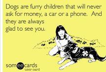 Fur babies  / by Courtney E. Nichols