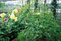 Tips & Techniques / by Bonnie Plants