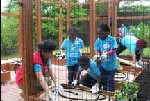 Community & School Garden Programs