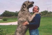 Hond chien hund dog / De beste vriend van de mens, een clichè? Nee, het is echt wel zo.