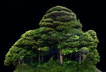 """Bonsai, Ikebana en Saikei / De ultieme boom, helemaal op eigen maat. """"Ikebana"""" komt van ikeru: houd in leven, schik bloemen, levend, en hana, bloem. Dus leven geven aan bloemen, en bloemenschikken. Bonsai: planten in een pot, van bon, een schaal of lage pot, en sai, aanplanting, tesamen een japanse kunstvorm die het vormen, kweken, optimaliseren en presenteren van  miniatuurbomen in potten beoogt. Saikei: een ingeplant landschap, waarbij alle technieken en principes van de bonsai-kunst gerespecteerd worden."""