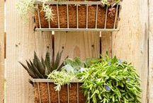 Outdoor Garden / Learn to grow, maintain and inspire your garden this season.