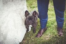 Dogs at Weddings / We love dogs at #weddings!