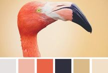 Home | Color Schemes / Color and painting ideas for the home. Good paint colors to sell your house, pretty neutral room colors, and great color schemes for decorating.  / by Andrea Brame | Writer
