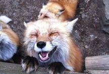 just foxes