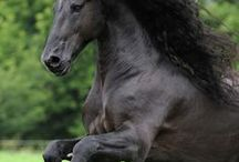equus / by Robin Geter