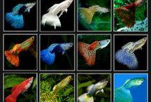 Aquarium, fish, etc