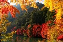 fall is here / by Darlene Renno