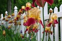 blooming festival / by Darlene Renno