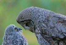 owl see ya later / by Darlene Renno