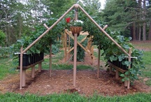 Gardening / A collection of ideas and DIY explanations for getting our garden up and running and maximizing production.