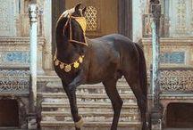 Horse  / by Brieana George