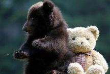 ♡ BEARS ♡