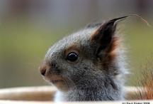 too darn cute / Animals make my heart happy. ❤️ / by Allison j.d.m