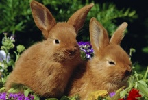 Bunnies I / by K. D. Wildflowers