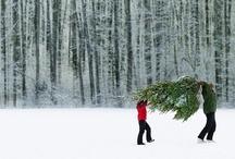 Christmas / by Christina Gee