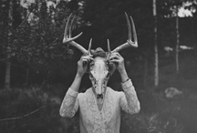 Animal masks / by Picturesque Productions