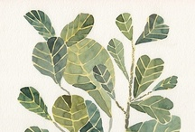 Plants & trees / by Ariana Pérez
