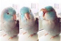 Parrotlet / Parakeet:D / by Lindsay Hiller