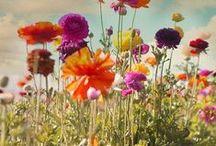 Flora / by Caitlin Coppler