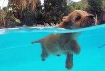 Swimming Fun! / Fun in the sun and everything great about enjoying a swimming pool.