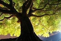 TreeHug / by Leigh Fullrich