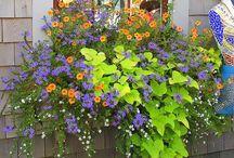 Gardening & Outdoors / by Angela Bonino