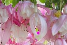 Plant @Garden & Forest
