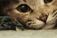 cat / by Kivikis cat