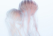Jellyfish Inspiration / by Erin McManness