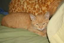 Pets and Animals / My pets, cute animals and pets I would like to have.