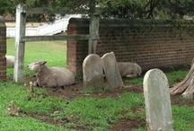 Quirky Tombstones