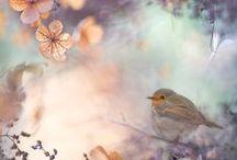 Lovely Birds, Nests & Eggs