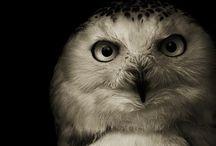Falconary & Birds of Prey