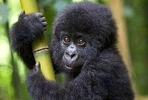 Go Wild! / Wild animals are so beautiful...
