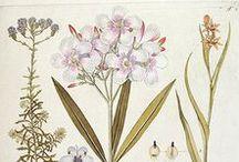 Botanicals / Nature Inspired Design