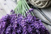 Lavender / The most wonderful fragrance of all time.
