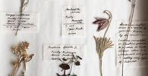 Botanical Specimens / The art of herbarium & plant collection and documentation.