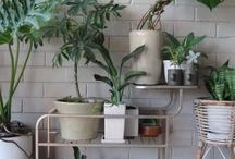 *Beautiful Indoor Plants*
