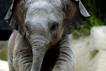 Elephants / by Alex Swift