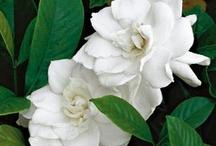 flowering wonders
