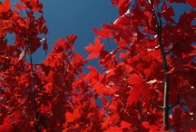 Fabulous Fall (My Photos) / These are photos I took just for pleasure  / by Ileana Habsburg-snyder