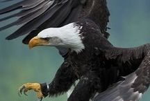 鳥類 / cg-geeks.com