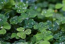 植物、樹木、花 / cg-geeks.com